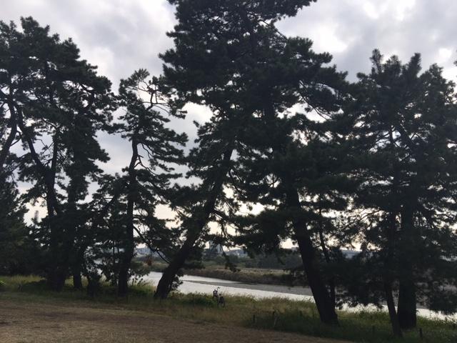 西河原公園周辺②多摩川に行ってきました!