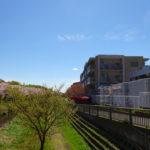 桜咲く野川沿いの住まいです。喜多見駅から歩いてくると東野川にこんな桜スポットが!?