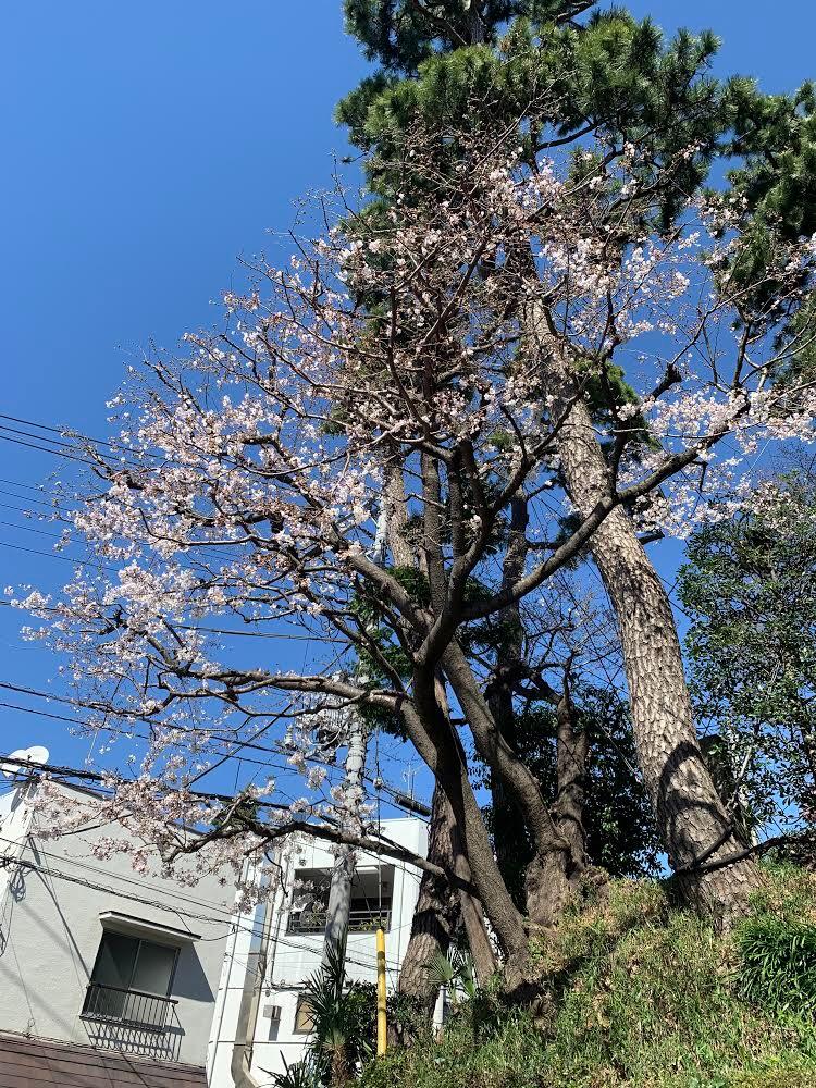 狛江ブログ