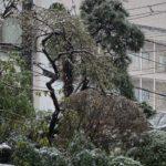 季節外れの雪!狛江市